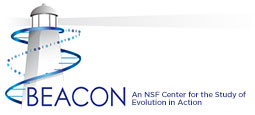 The BEACON Center logo - An NSF Center for the Study of Evolution in Action