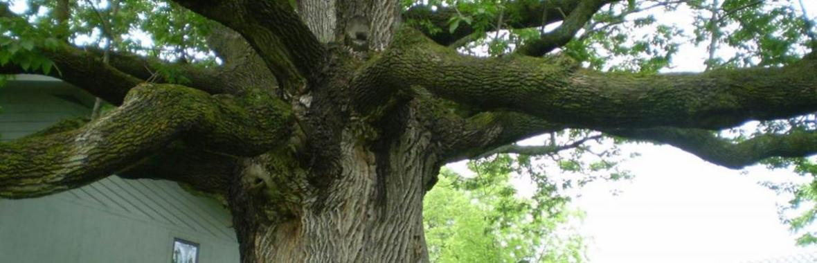 The Tree Doctor: Landscape and Tree Problems